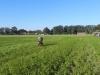 solms-coesfeld-28-9-2013-015