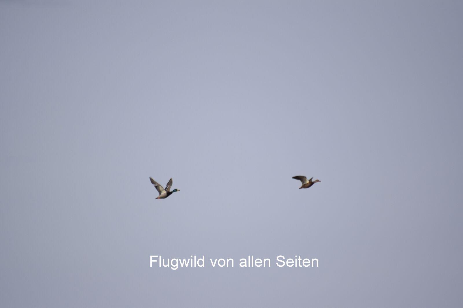 Flugwild von allen Seiten ...