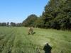 solms-coesfeld-28-9-2013-011