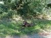 solms-coesfeld-28-9-2013-029